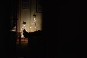 Cena ai sentori di pino mugo e racconti di Natale